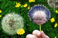 dandelionbaby