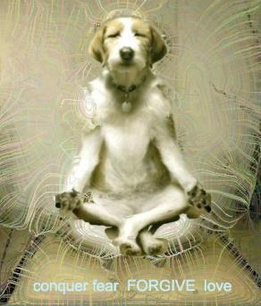 dog-meditate