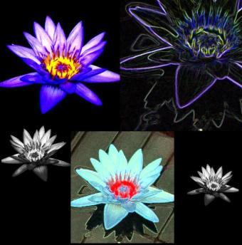 lotus567