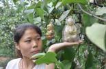 buddha-pear (6)