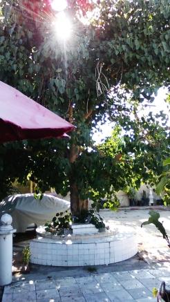 thaita-backyardjuly2014 (6)